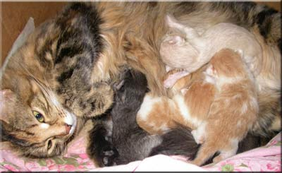 The first photos of the kittens