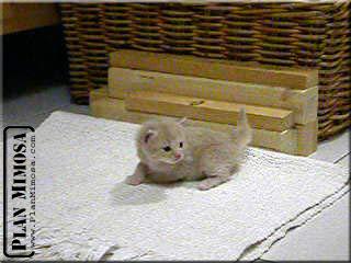 2003.05.23_petits-beige_01