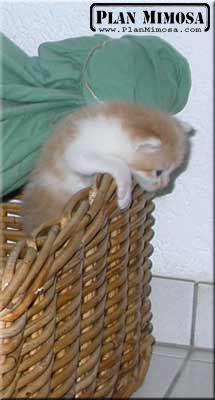 2003.05.23_petits-oudini_02
