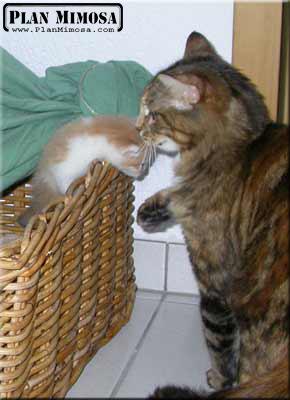 2003.05.23_petits-oudini_03